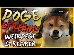 Doge Sex Meme - theonemanny doge streamer sex story to anniinap with her
