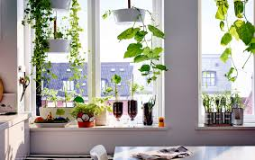 Window Sill Herb Garden Designs Dining Room Decorations Window Sill Herbs Ideas What Is A Window