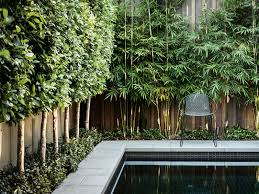 Home Design Landscaping Software Definition Best 25 Bamboo Hedge Ideas On Pinterest Bamboo Screen Garden