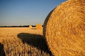 uatre nueva escala salarial para los trabajadores agrarios la uatre informó la nueva escala salarial para trabajadores rurales