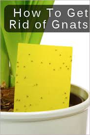 Getting Rid Of Flies In Backyard Tips For Getting Rid Of Gnats Tipnut Com