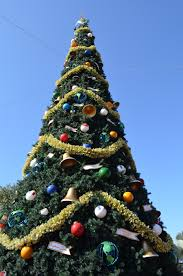 christmas trees at disney parks disney parks blog