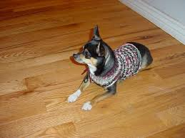 chihuahua sweaters the loom knifty knitter chihuahua or small sweater