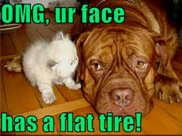 Cat And Dog Memes - funny cat dog funny cat pictures