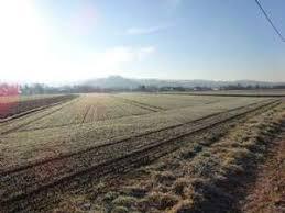 landwirtschaftliche fläche kaufen verkauf landwirtschaftliche flächen burgenland