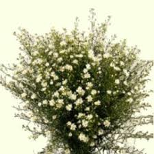 wholesale flowers online 39 best white wedding flowers images on white wedding
