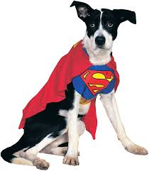 top 10 tuesdays dog costumes halloween costume ideas