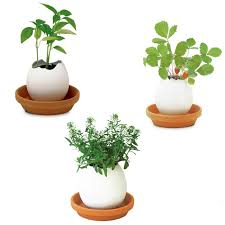 Indore Plants Popular Green Plant Pot Buy Cheap Green Plant Pot Lots From China