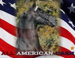 Horse With American Flag All American Cash Rising Star Ranch