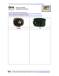 mammals and birds decision tree by tesiboard teaching