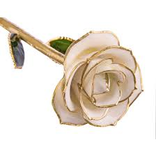 gold dipped roses sugar white 24kt gold dipped steven singer jewelers pretty