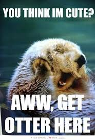 Cutest Memes - you think i m cute aww get otter here picture quotes cute