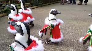 festive penguins dress up as father christmas at park in japan