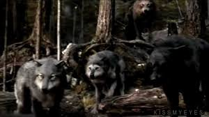 twilight saga wolf pack
