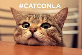 Cat Instagram Inside Catcon A Comic Con For Cats