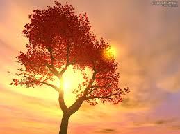 sunsets majestic sunset sky tree light wallpapers hd free