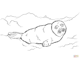 cute seal coloring free download clip art free clip art on
