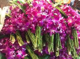 orchids for sale beautiful orchids for sale picture of pak khlong talat flower