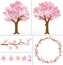cherry blossoms for design elements stock vector illustration of