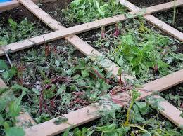 advice for colorado gardeners salvaging your garden when hail