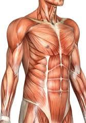 Human Anatomy And Physiology Courses Online Human Anatomy And Physiology Essentials Of Anatomy And Physiology