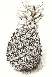ananas no 1 drawing by roswitha schmuecker