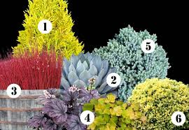 Shrub Garden Ideas My Front Yard Landscape Plan This Year Ideas For Year