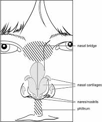 Human Anatomy Terminology Elements Of Morphology Human Malformation Terminology