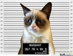 Grumpy Cat Meme Happy - grumpy cat happy cat mug shot by djwuss meme center