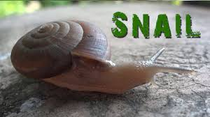 snail move animal video for kids youtube