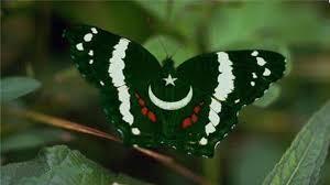 Pakistans Flag Butterfly Pakistani Flag Wallpapers Hd Free Hd Wallpaper