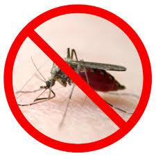 amazon com coleman skinsmart deet free pump spray insect