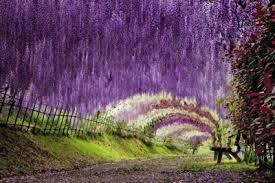 beautiful places on earth kawachi fuji garden one of the most beautiful places on earth
