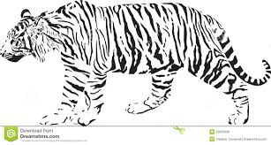 tiger black and white stock vector illustration of mammal 23632338