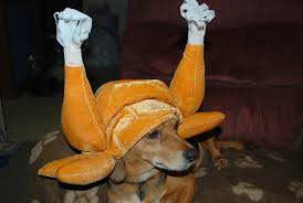 18 dogs who are ready for thanksgiving what s trending