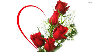 wallpaper flower red rose red rose bouquet hd wallpaper hd latest wallpapers