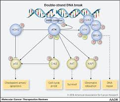 atm mutations in cancer therapeutic implications molecular