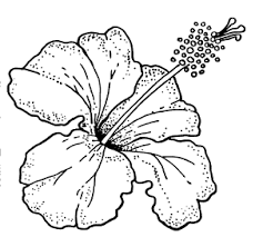 coloring pictures of hibiscus flowers hibiscus clipart coloring pencil and in color hibiscus clipart