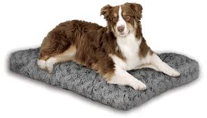 10 best pet beds for dogs and cats to check out
