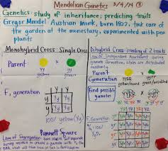 mrs paul biology cellular respiration glad anchor chart notes