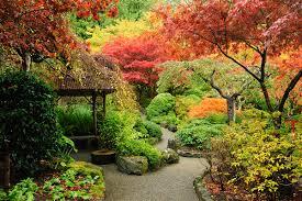 Pflanzen Fur Japanischen Garten Pflanzen Für Farbenpracht Im Herbst Zuhause Bei Sam