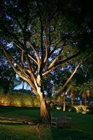 how to put lights on a tree outdoors low light trees outdoor outdoor designs