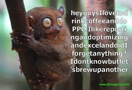 Lemur Meme - ppc meme coffee lemur