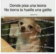 Memes De Chihuahua - memes perro chihuahua enojado google search memes del perro