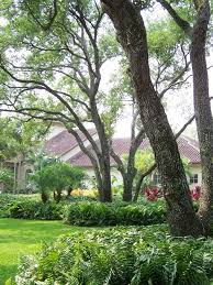 front yard trees houzz