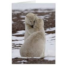 polar greeting cards zazzle