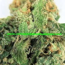buy edible cannabis online hawaiian buy marijuana online for sale buy cannabis