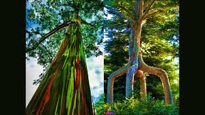 most beautiful trees in the world 10 wonderful trees in the world