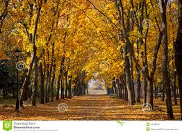 garden walkway with picturesque autumn trees stock photo image