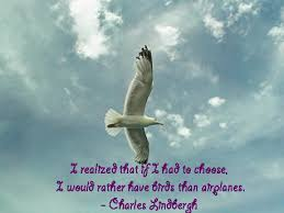 swinespi pictures birds quotes larry bird quotes bird quotes